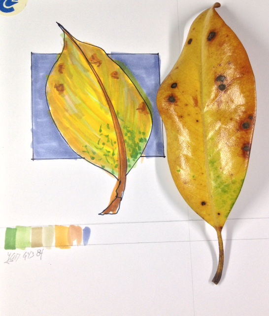 class-leaf